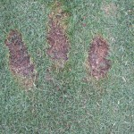 Fat Golf Shot Divots