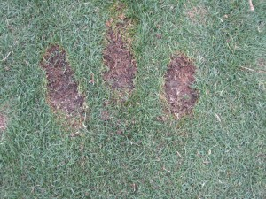 three divots from Fat Shots